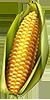 Cotton and corn
